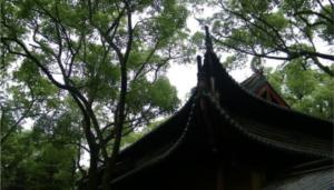 寶陀觀音寺